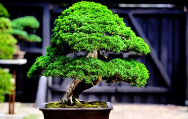 bonsai landschaft