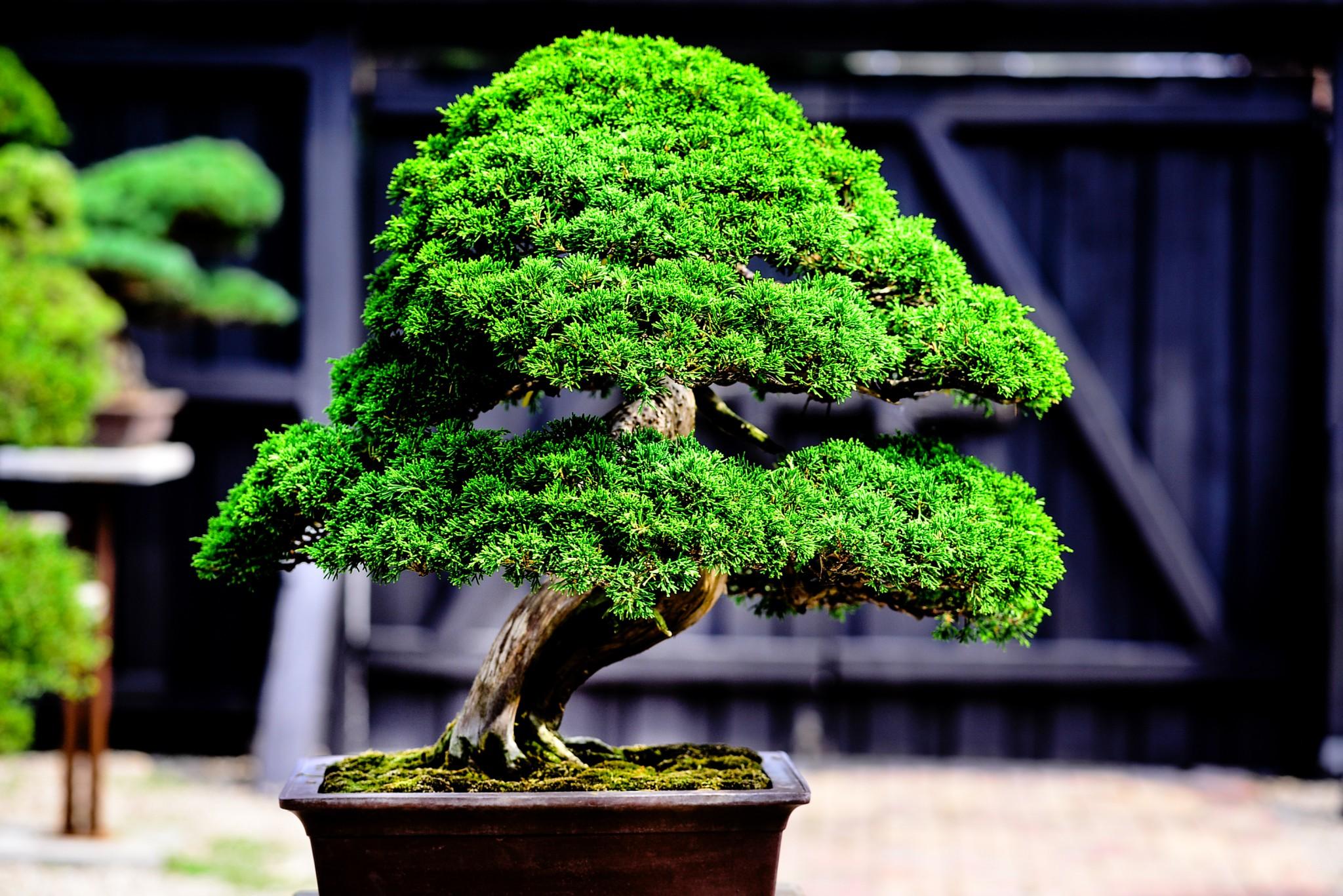 bonsai landschaft