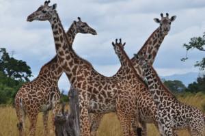 nationalpar tansania