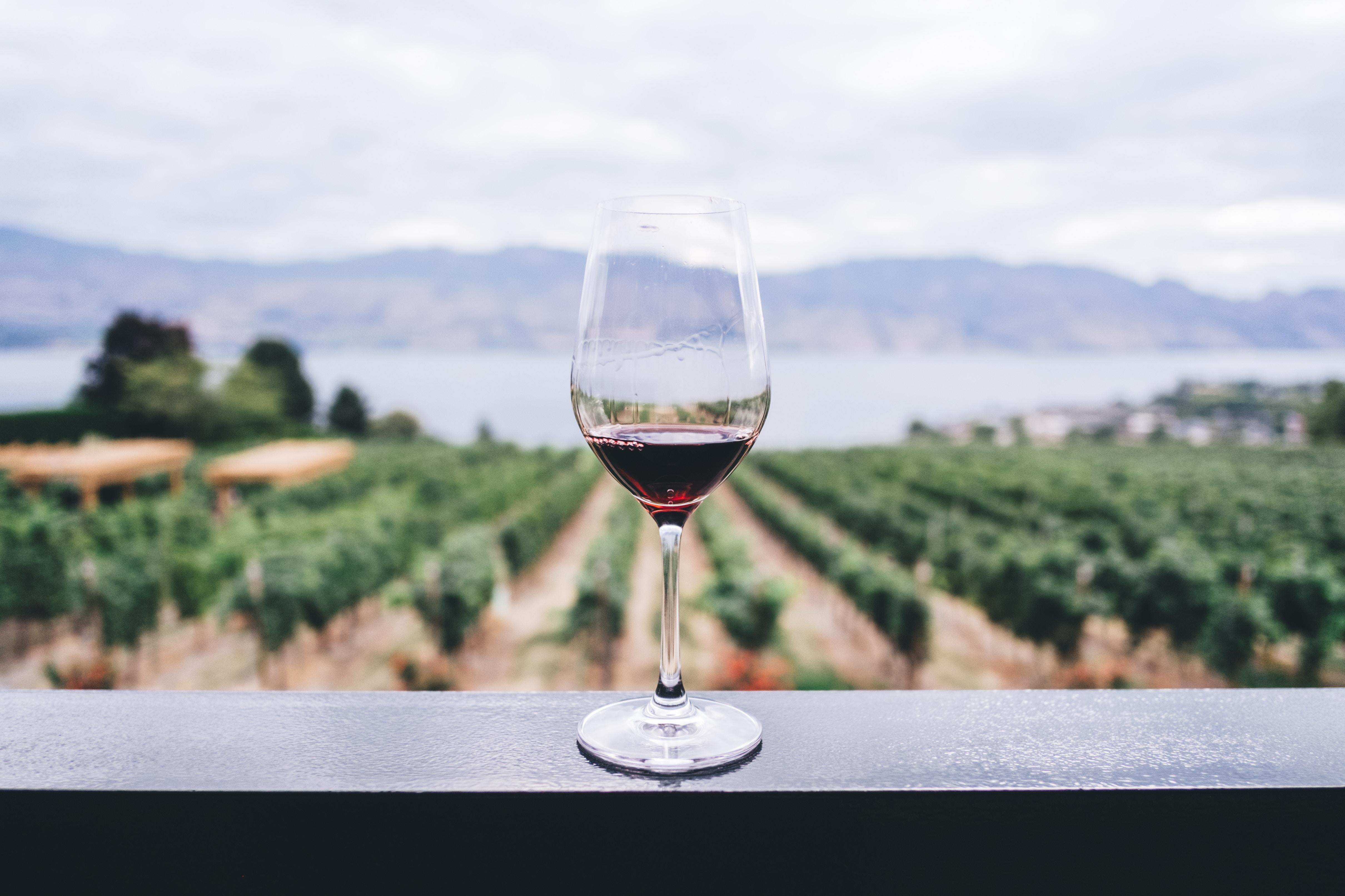 Ungarischer Wein - ein außergewöhnliches Geschenk!