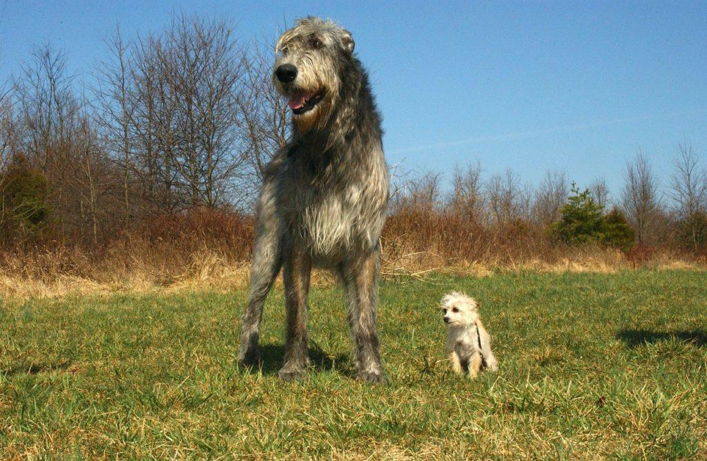 größten hunde