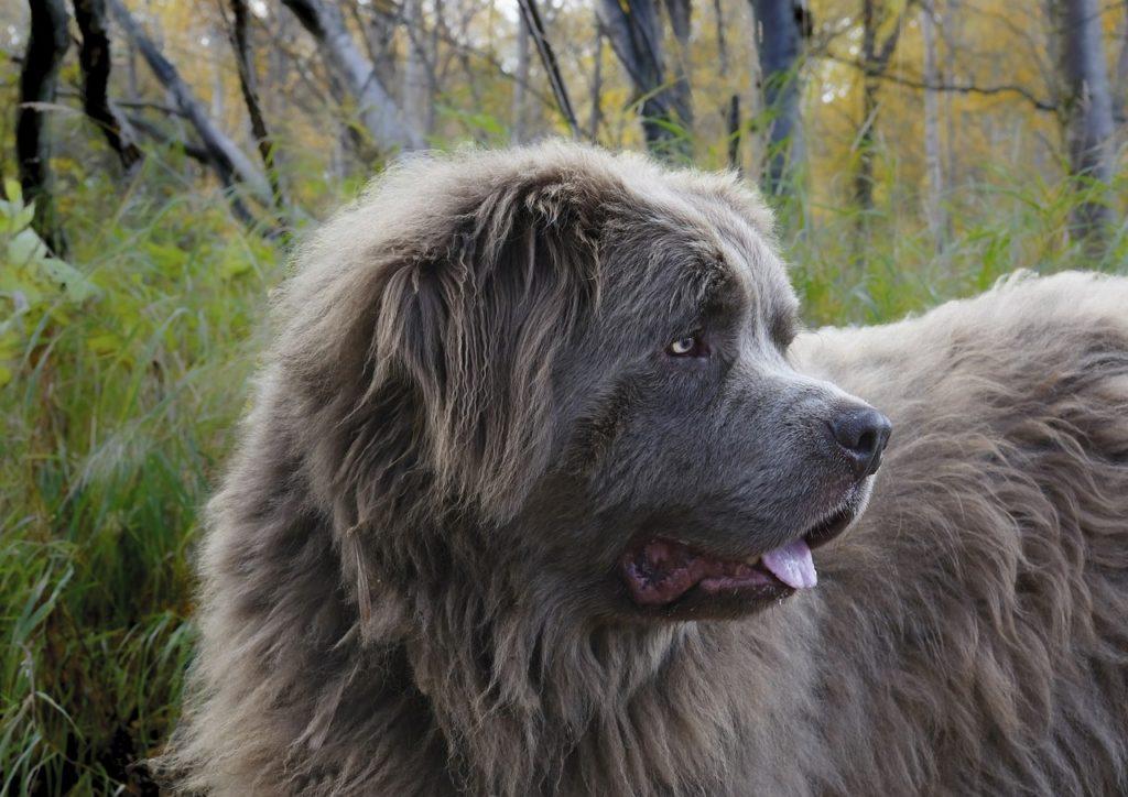 nicht der größte hund der welt