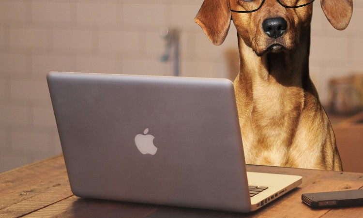 Hund im Büro – 'Schnapsidee' oder nicht?!