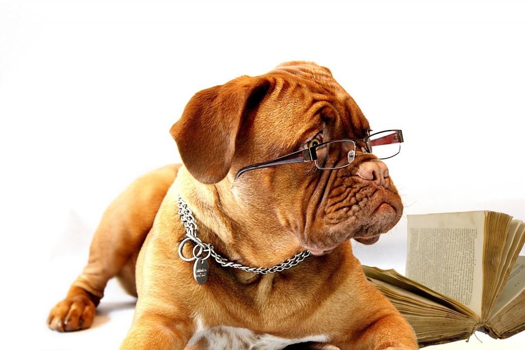 hund mit ins büro nehmen