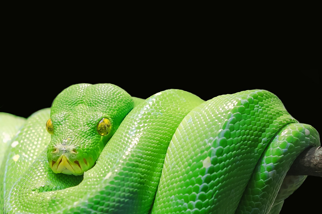 die giftigste schlange der welt