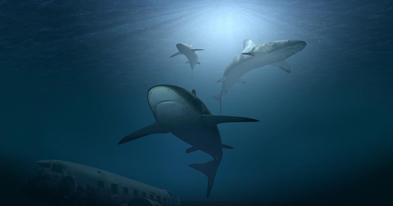 starker hai