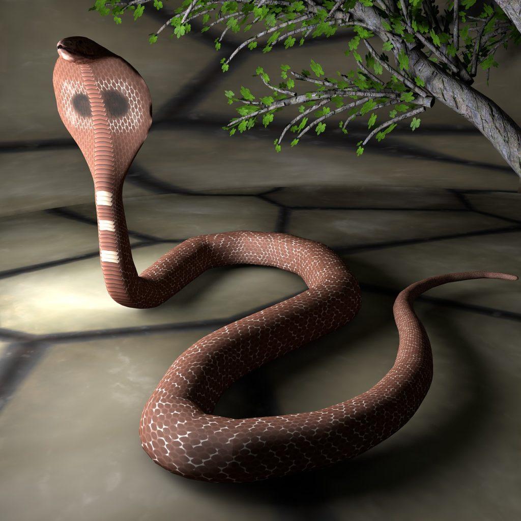 eine kobra spuckt gift